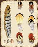 Vintage Feather Study - E