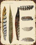 Vintage Feather Study - J