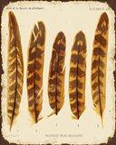 Vintage Feather Study - K
