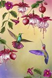 Fuchsias & Hummingbirds