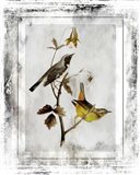 Birds With Class - A