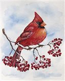 Cardinal And Winter Berries - A