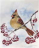 Cardinal And Winter Berries - B