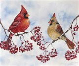 Cardinal And Winter Berries - C