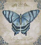 Bleu Papillon - D