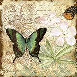 Inspirational Butterflies - C