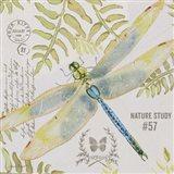 Botanical Dragonfly A