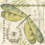 Dragonfly Daydreams A