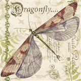 Dragonfly Daydreams B