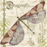 Dragonfly Daydreams B