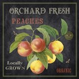 Orchard Fresh Peaches