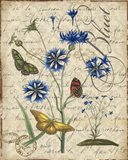 Botanical - Aster Bluet Damask