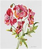 Botanicals 6