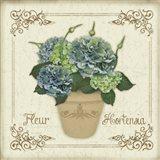 Fleur Hortensia 1