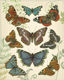 Butterfly Plate 4
