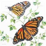 Summertime Butterflies B