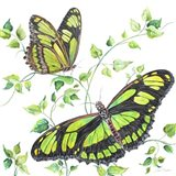 Summertime Butterflies D