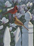 Cardinals Magnolias