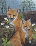 Summertime Fox Kits