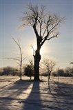 Winter Sun Behind Old Tree