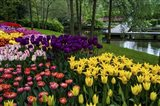 Colorful Corner Keukenhof Tulips Garden 1