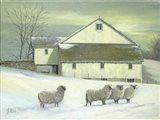 Sheep At Granough