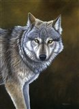In The Eyes Of The Wolf
