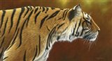 Tense Tiger