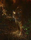Tiger Odyssey