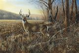 Bluff Country Buck