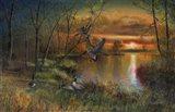 Evening Refuge