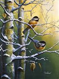 Winter Refuge Chickadees