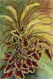 Coleus and Grasses