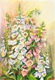 Foxglove in a Garden