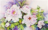 Peonies with Pink Centers