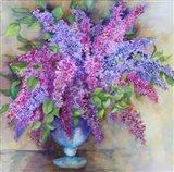 A Varity of Lilacs