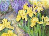 Iris in a Rock Garden