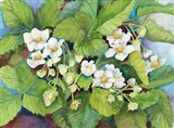 Strawberry Patch - B. Flowering
