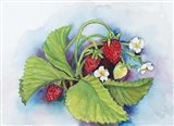 Strawberry Patch - E. Sample Berries