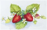 Strawberry Patch - F. Berry Border