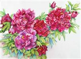 A Study of Red Peonies