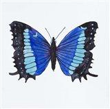 Butterfly Collectio Baeotus-Baeotis