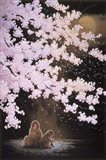 Falling Cherry Blossoms