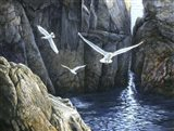 The Gulls of Puplit Rock