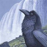 Raven Water