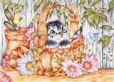 Daisie Kitten