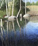 Reflections in a Blue Pond