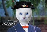 Meowy Poppins