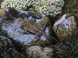 On the Rocks, Great Horned Lizard