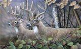 Blackberry Vines White Tail Deer